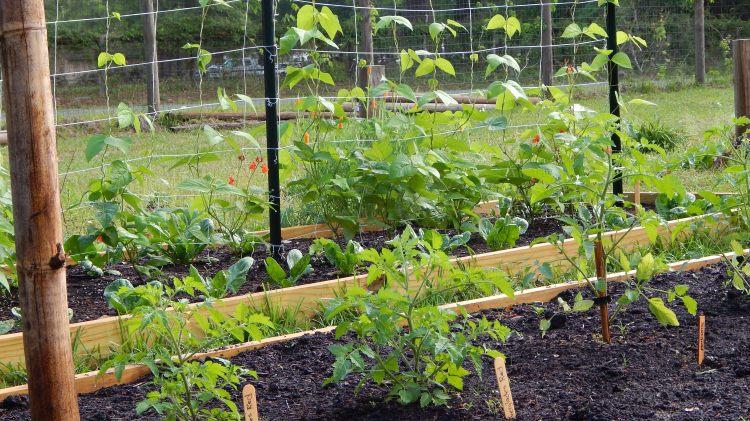 Florida Garden | Symbolic Gardening